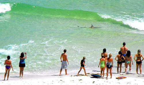 Beach-shark